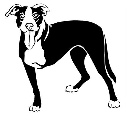 3 leg dog